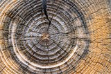 13344324-weathered-tree-rings